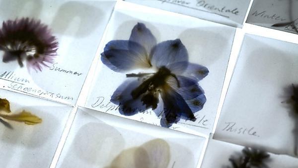 Florilegium (Spring/ Summer). Light box installation.