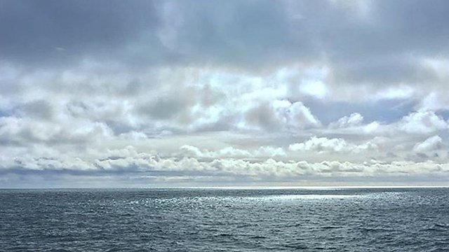 <p>Harry Dodge sea</p>