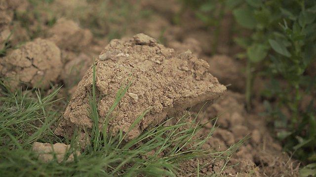 <p>Ingenious Soil</p>