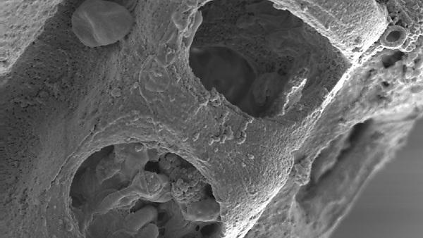 <p>New energy/renewables electron microscopy image</p>
