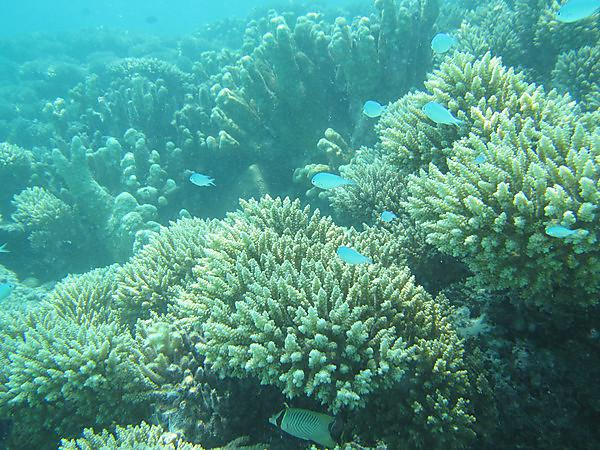 <p>Coral reef</p>