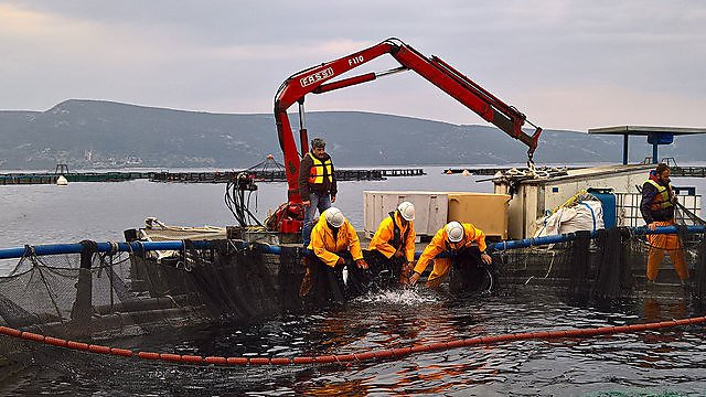 <p>Sustainable aquaculture systems<br></p>