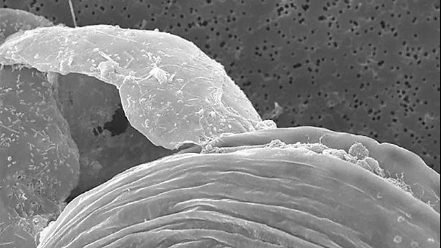 <p>Microscopic marine Jessica Harvey profile </p>