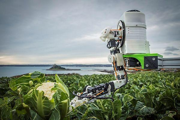 <p>Automated Brassica Harvesting project</p>