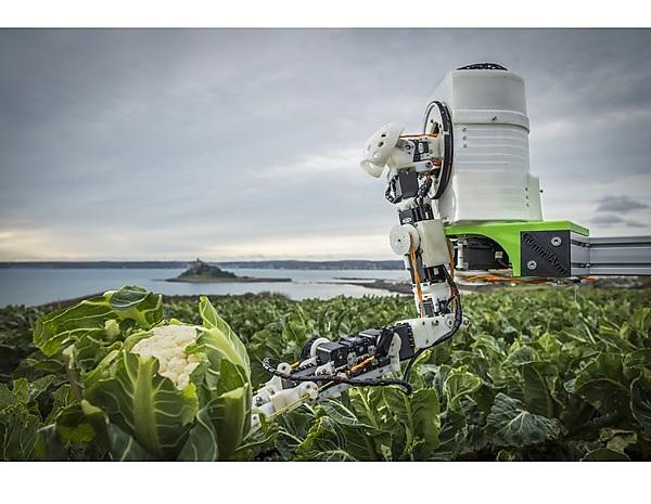 Automated Brassica Harvesting in Cornwall (ABC)