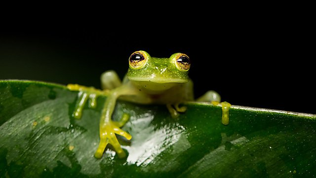 <p>A frog on a leaf.</p>
