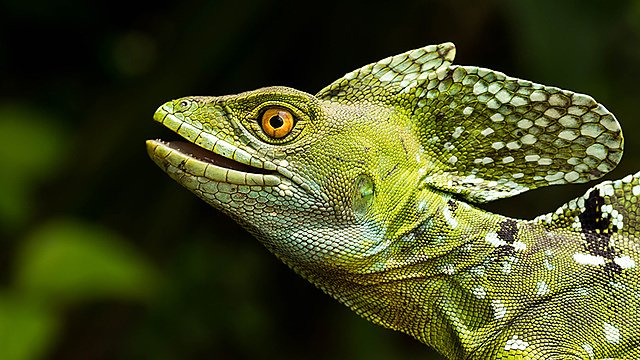 <p>A lizard on a tree branch.</p>
