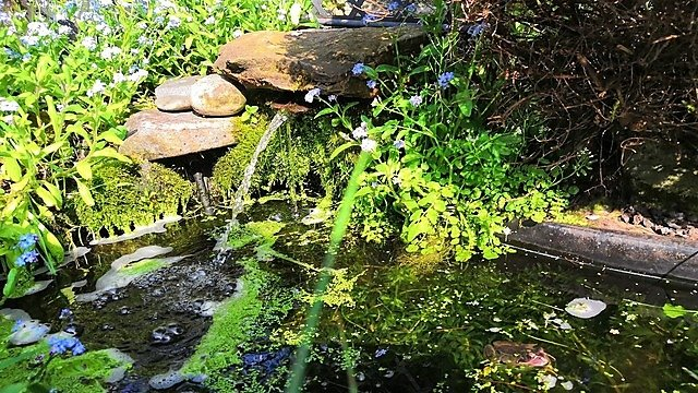 <p>Image of wildlife pond with shade and vegetation for frogs courtesy of Paul Kleiman's garden (c) ZSL<br></p>