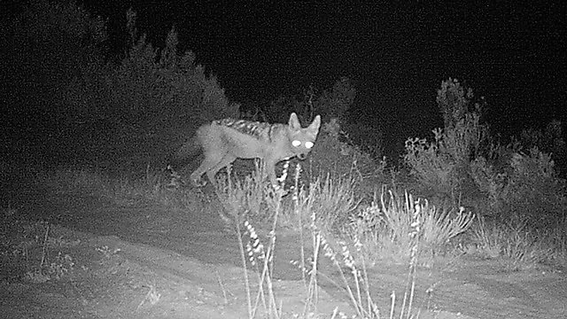 <p>Capturing the caracal on camera in South Africa<br></p>