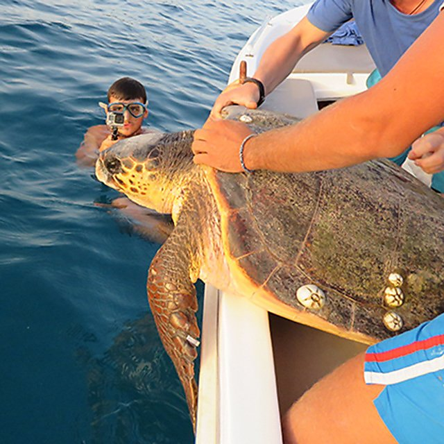 <p>Releasing a turtle back to sea</p>