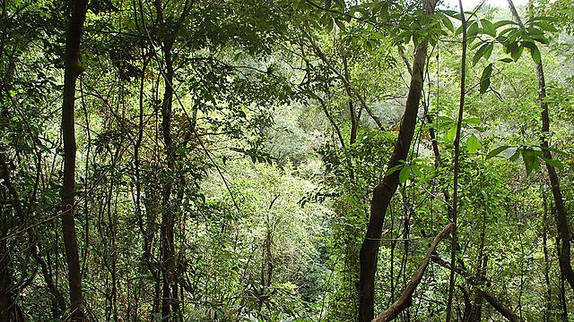<p>Ecology and evolution. forest. jungle. tree</p>