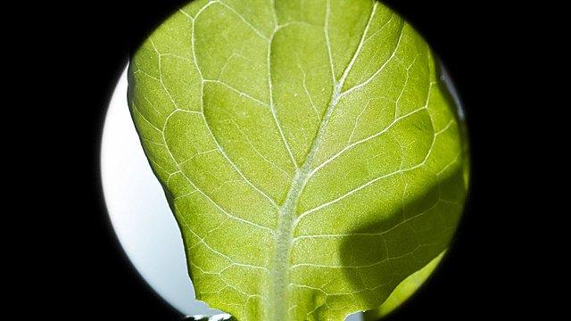<p>Plant close up - FIND project</p>