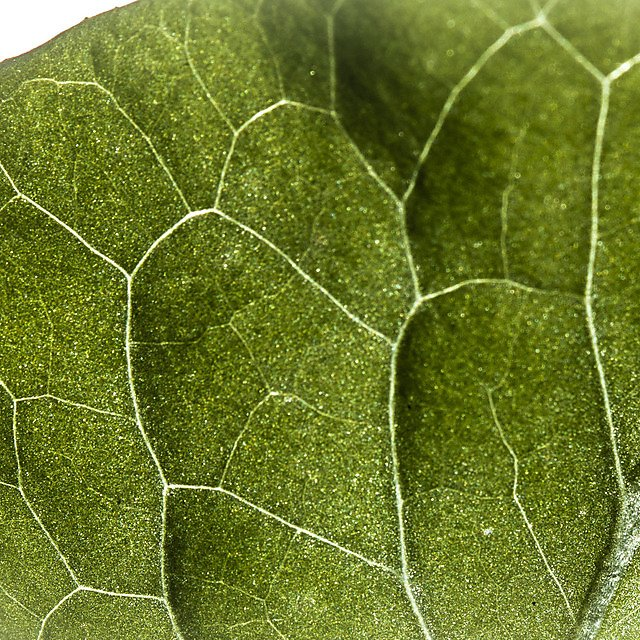 <p>Close up of a leaf - FIND project</p>