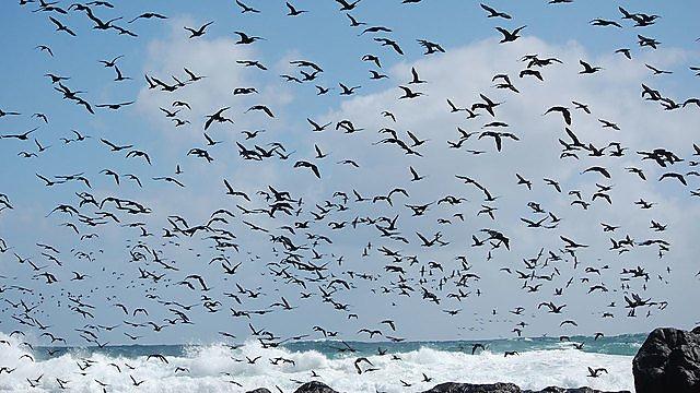 <p>Birds</p>