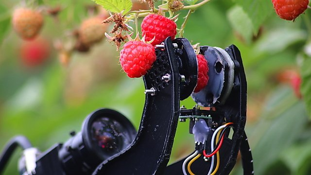 <p>Raspberry harvesting robot</p>
