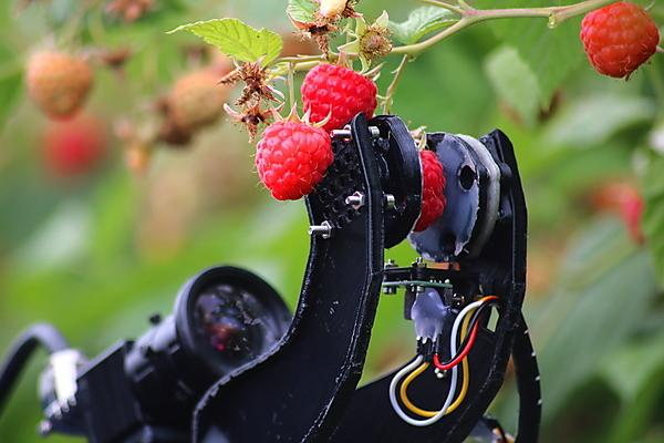 University spinout secures equity funding to enhance development of robot fruit harvesters