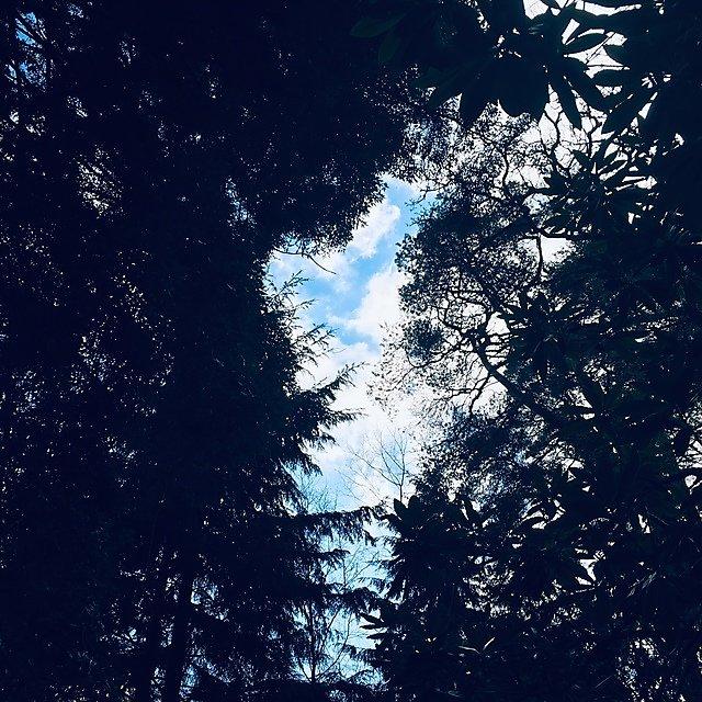<p>Cloud through tree cover</p>