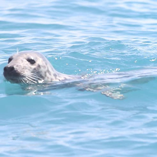 <p>One of the many seals we spotted<br></p>