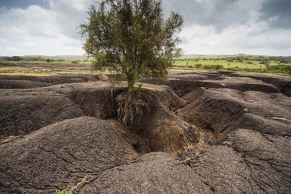 <p>Gullies caused by erosion&nbsp;in the East African Rift System of Tanzania (Image: Carey Marks/University of Plymouth)</p>