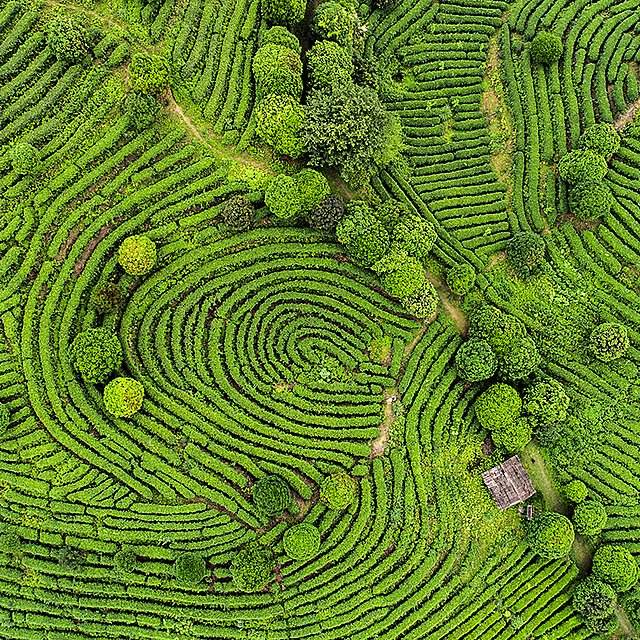 <p>Aerial view of Tea fields in China<br></p>