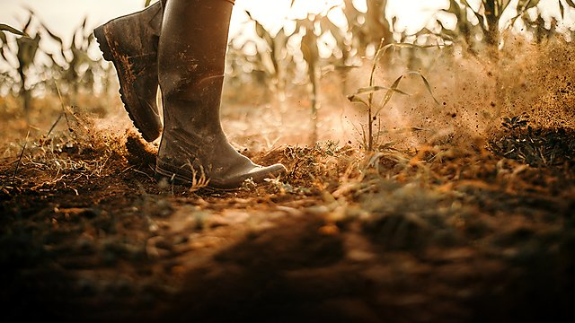 <p>Farmer walking on infertile soil</p>