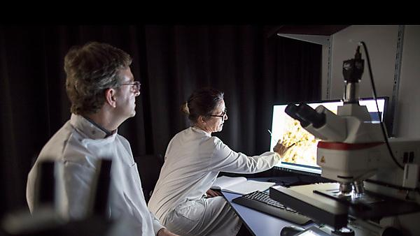 <p>Professor Edgar Kramer and Tracy use microscopy screen</p>
