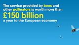 What do pollinators do for us?