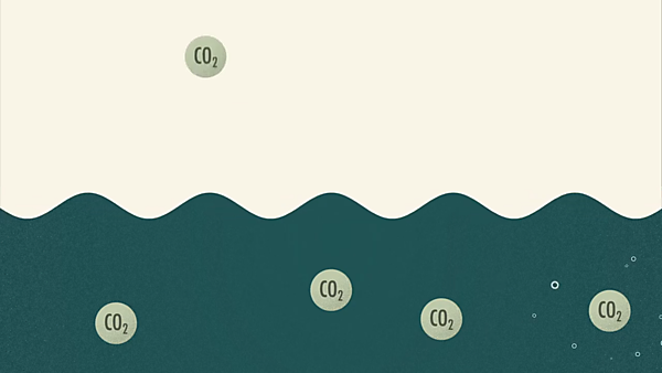 <p>What is ocean acidification? animation screenshot<br></p>