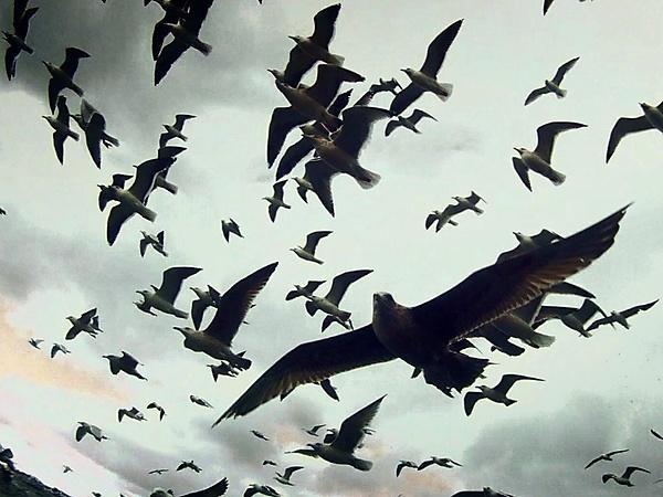 <p>Leviathan (2012)</p>