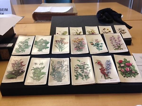 <p>'Botany Cards, n.d., probably used for plant identification, from the
