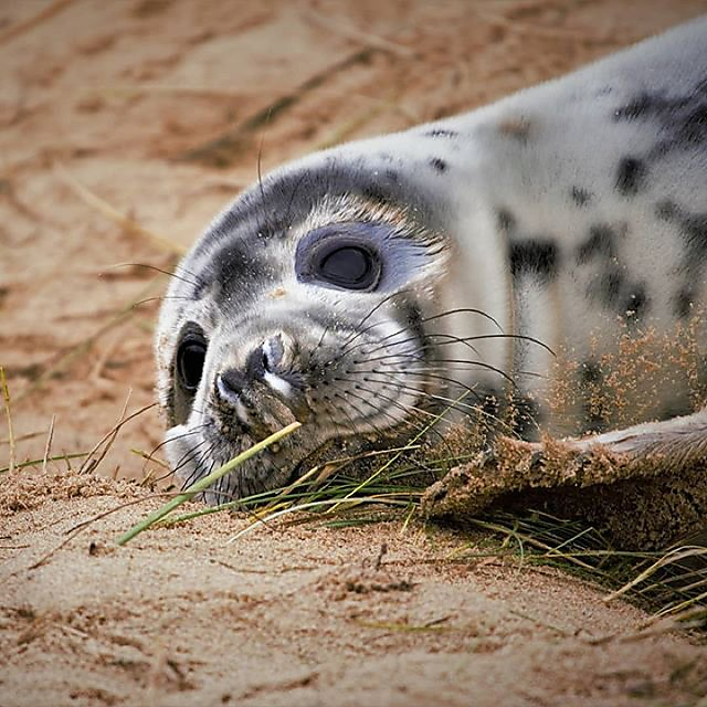 <p>Seal pup.</p>