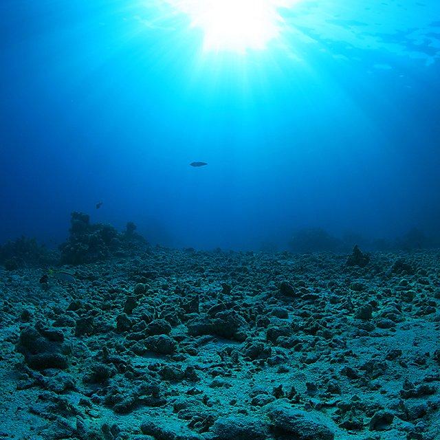 <p>Barren coral reef</p>