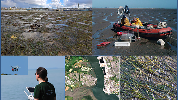 Intertidal seagrass meadows in South west England: the ecological and socio-economic benefits of restoration