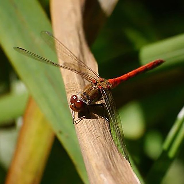 <p>Close-up of a dragonfly.</p>