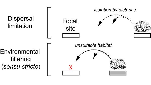 Testing environment filters as mechanisms of ecosystem resilience to non-native species invasion