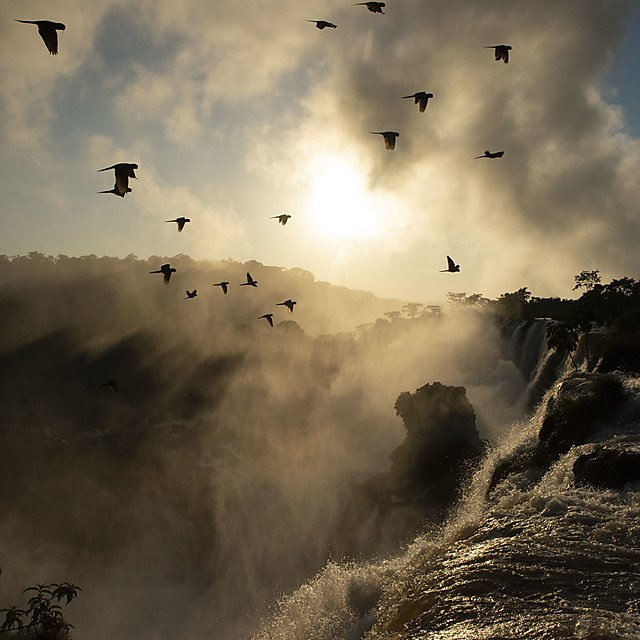 <p>Sunset over Iguazu waterfalls on the border between Argentina and Brazil, and a flock of parrots (Credit Maddie Close BBC NHU)<br></p>