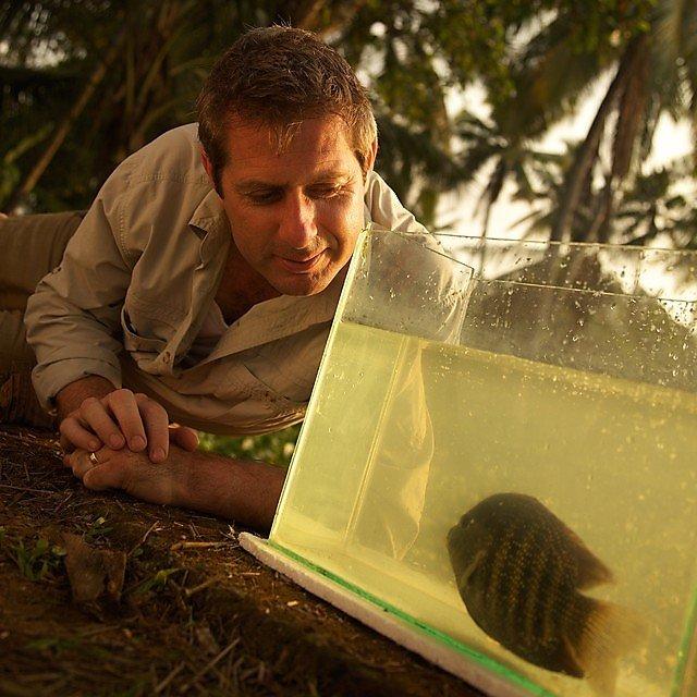 <p>Professor Iain Stewart with a&nbsp;carmin (<i>etroplus suratensis</i>)</p>