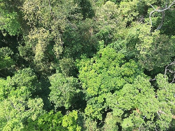 Could climate change be giving our forests a fever?