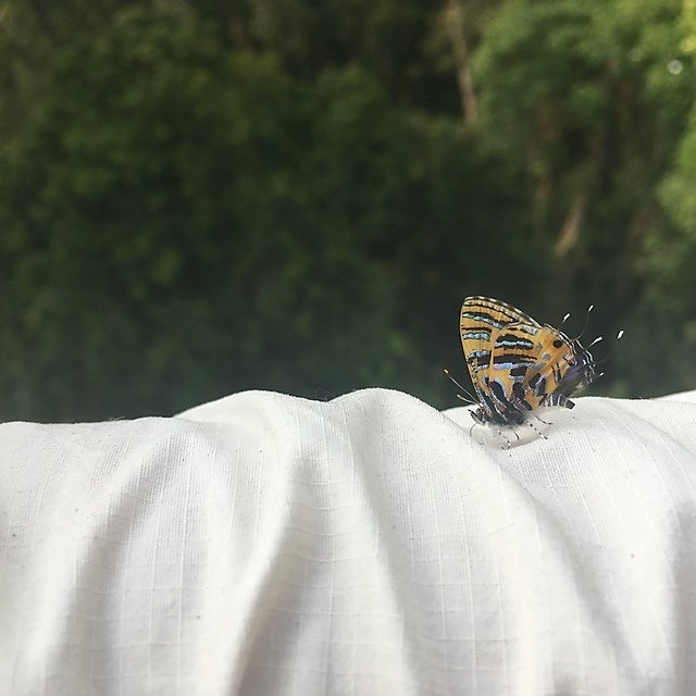 <p>Greeted by a butterfly in the tropical forest</p>