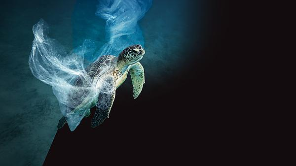 <p>Turtle underwater wrapped in plastic.<br></p>