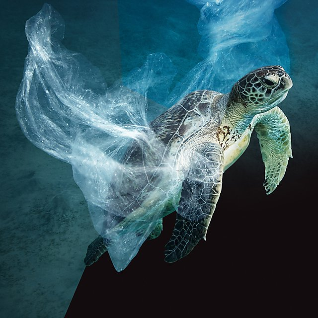 <p><i></i>Turtle wrapped in plastic<br></p>