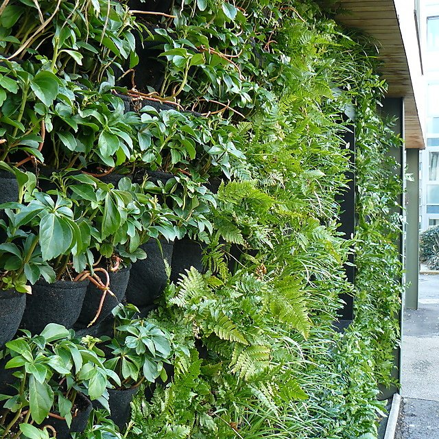 <p>Sustainability Hub - green wall for research</p>