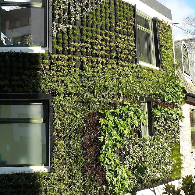 <p>Sustainability Hub - green wall</p>