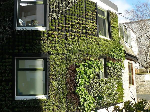 <p>Sustainability Hub - green wall</p>
