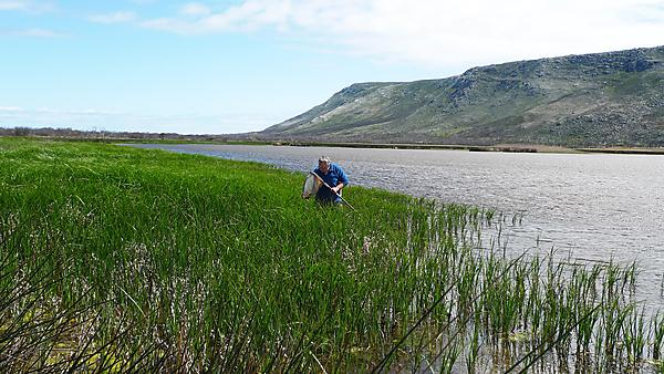 Sampling a natural wetland close to Cape Agulhas, the most southerly point in Africa