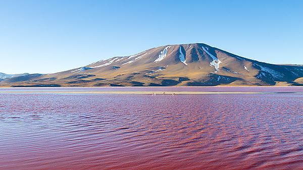 <p>Laguna Colorada view, Bolivia<br></p>