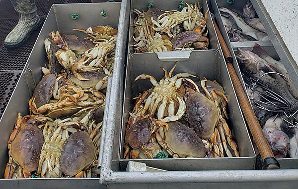 <p>Dungeness crab support the most valuable fishery on the US West Coast (Credit Theo Stein, NOAA)<br></p>
