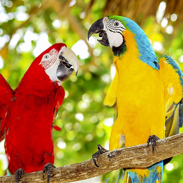 <p>A couple of beautiful macaws<br></p>