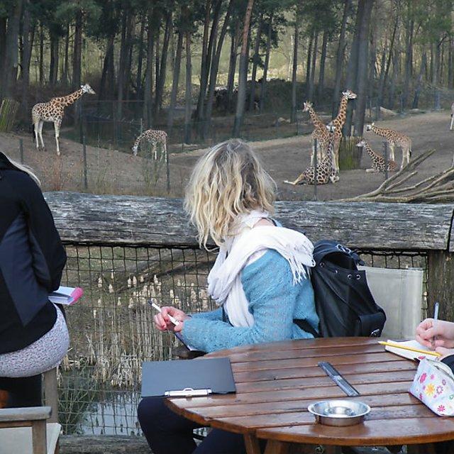 <p>Giraffe observation</p>