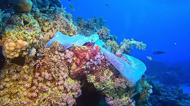 <p>Beautiful tropical coral reef with sea anemones, clownfish and colorful coral fish – polluted with plastic bag.<br></p>